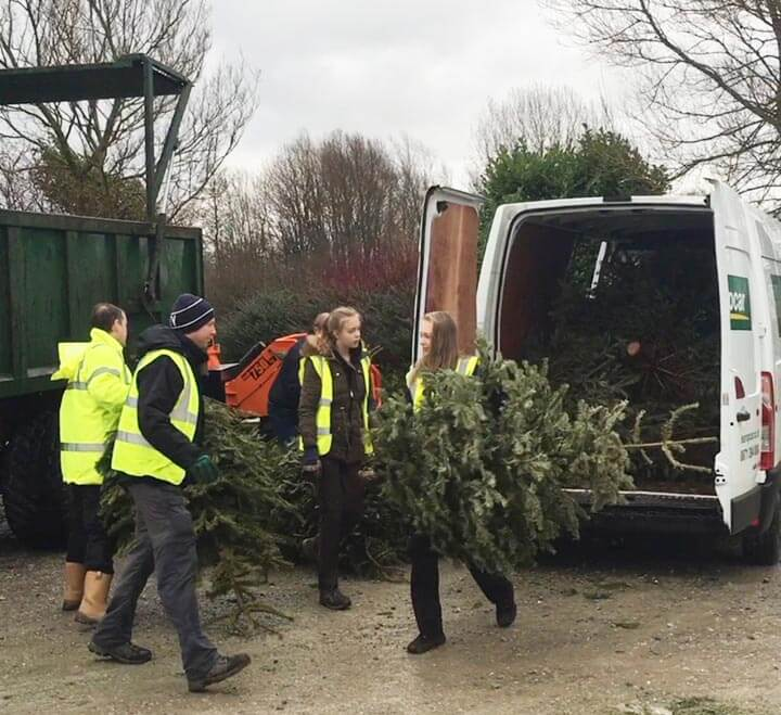 Charity Christmas Tree Collection